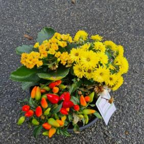 coupe de plante cimetière
