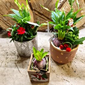 Plantes - fêtes de fin d'année