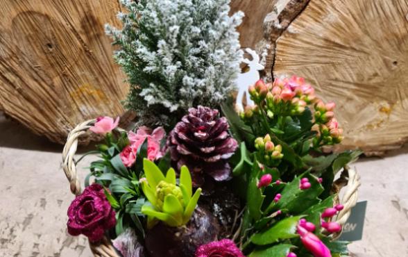 Plantes - fêtes de fin d'année - Grandes